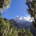 Kili – Day 3 – Barranco camp