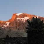 Kili – to Karanga camp (3960m)