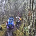 Mt Kilimanjaro – Day 3