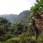 Rwenzoris – Bujuku (3962m)